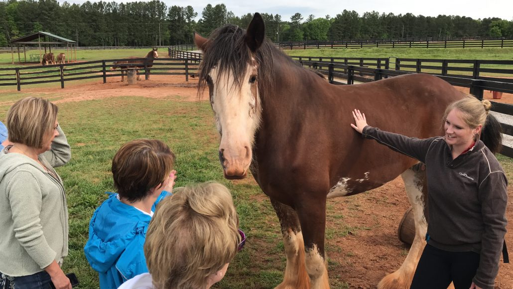 things to do in oconee_classic city clydesdales
