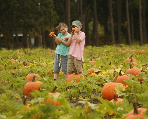 Pumpkin Picking at Washington Farms